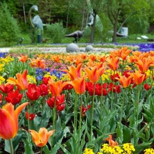 Tulpen im Neumühlepark